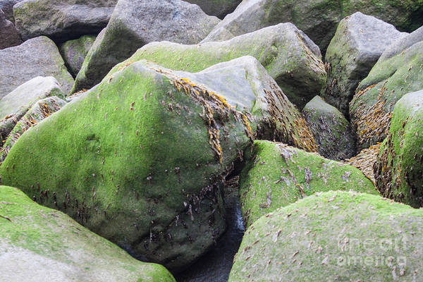 Wall Art - Photograph - Mossy Stones by Sara Ricer