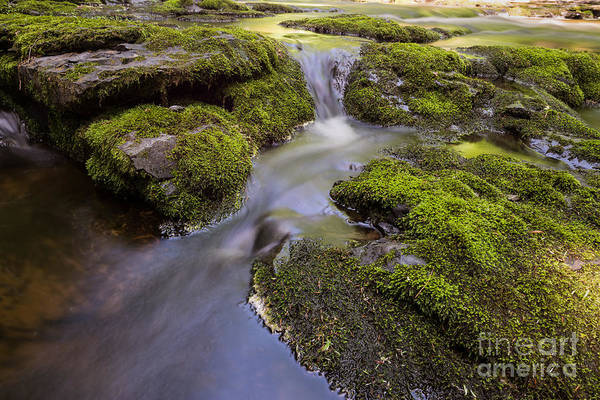 Mossy Photograph - Mossy Stream by Michael Ver Sprill