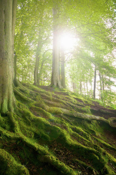 Vertical Landscape Photograph - Mossy Tree Roots On Forest Hillside by Matt Walford