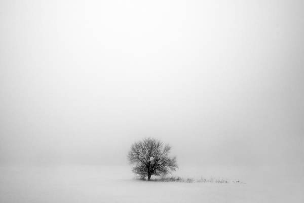 Leafless Tree Wall Art - Photograph - Mostly White by Todd Klassy