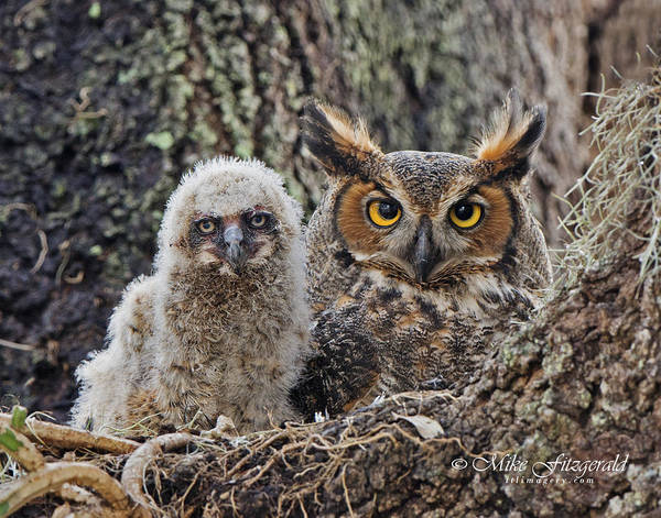 Photograph - Mother And Chick by Mike Fitzgerald