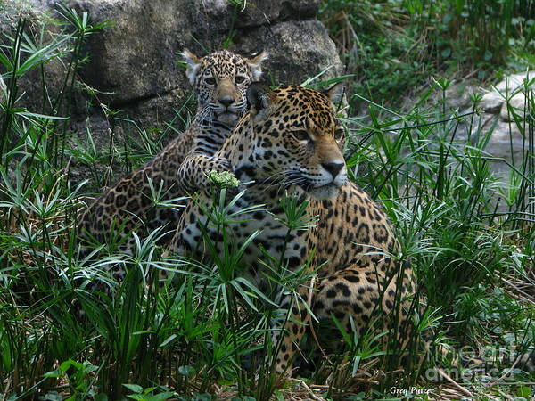 Patzer Photograph - Mother And Child by Greg Patzer