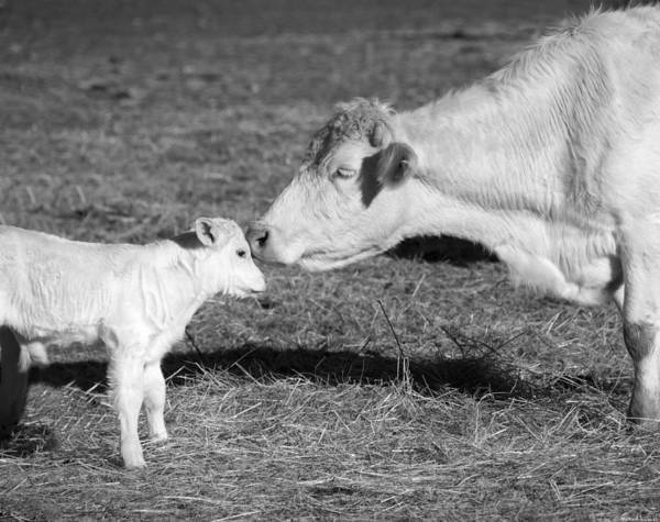 Barnyard Photograph - Mother And Child by Steven Michael