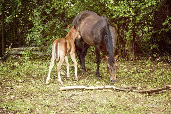 Wall Art - Photograph - Mother And Foal by Juli Scalzi