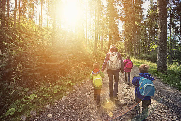 Mother And Kids Hiking In Sunny Forest Art Print by Imgorthand