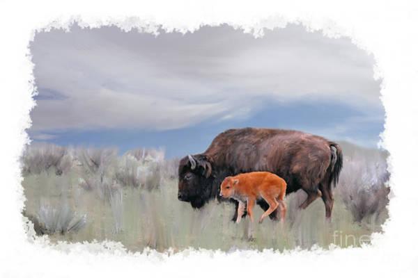 Photograph - Mother Buffalo With Baby Buffalo by Dan Friend