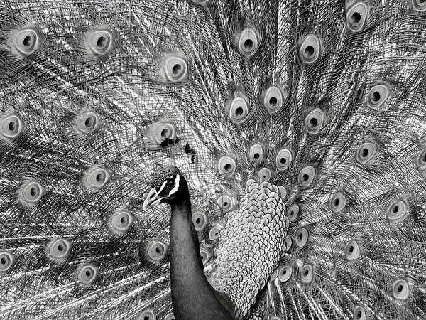 Coastal Bird Photograph - Mother Natures Fireworks by Karen Wiles