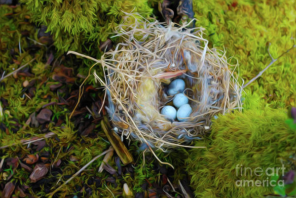 Robin Egg Blue Photograph - Mother Of Four by Laura Brightwood