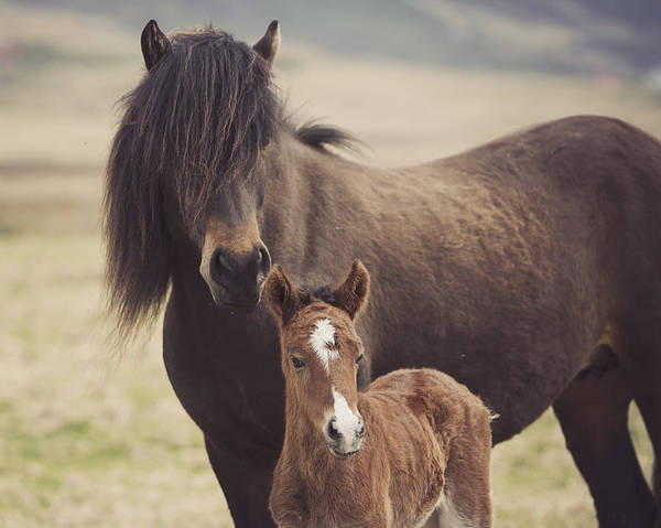 Mare And Foal Photograph - Motherly Love by Irene Suchocki