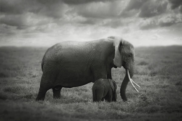 Wall Art - Photograph - Mother's Love by Bjorn Persson