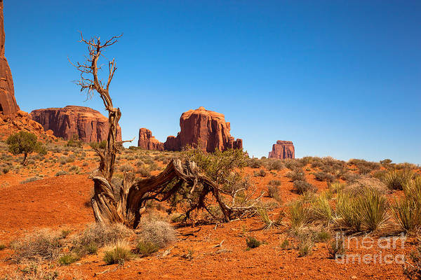 Monument Valley Navajo Tribal Park Wall Art - Photograph - Moument Valley And Tree Stump by Jane Rix