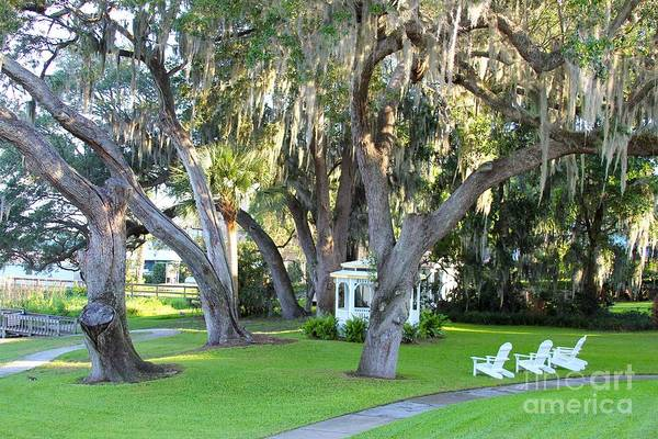 River Hawk Photograph - Mount Dora by Carey Chen