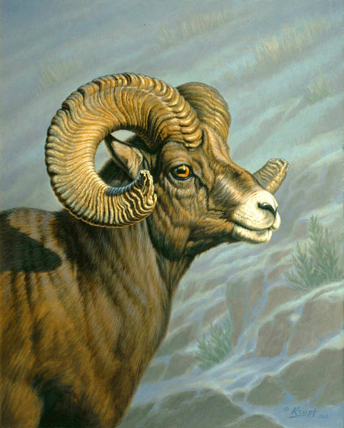 Ram Painting - Mount Everts Ram by Paul Krapf
