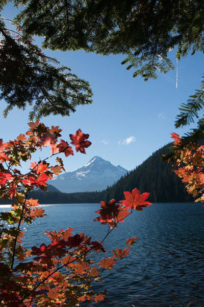Mount Hood In Autumn Art Print by W Chris Fooshee