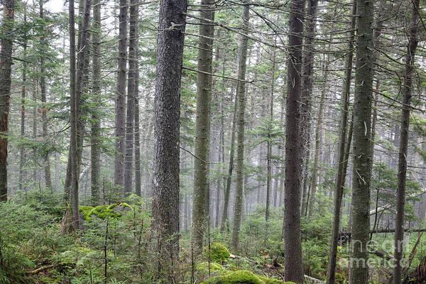 Photograph - Mount Jim - Kinsman Notch New Hampshire by Erin Paul Donovan