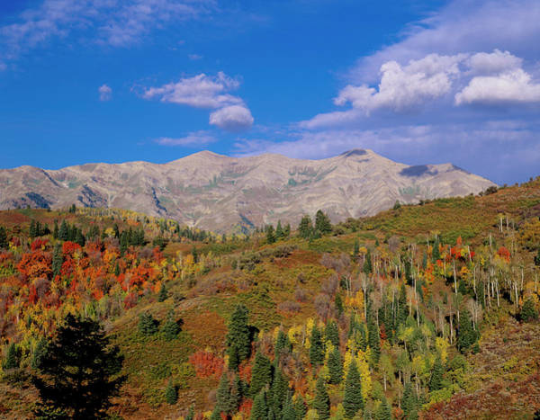 Uinta Photograph - Mount Nebo Scenic Byway by Howie Garber