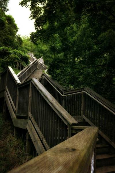 Holland State Park Photograph - Mount Pisgah Stairs by Michelle Calkins