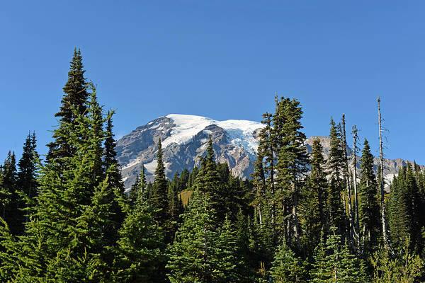 Mount Rainier Evergreens Art Print