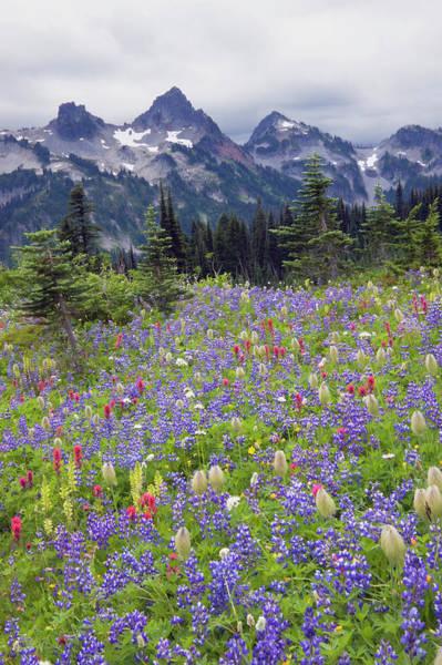 Archer Photograph - Mount Rainier National Park, Tatoosh by Ken Archer