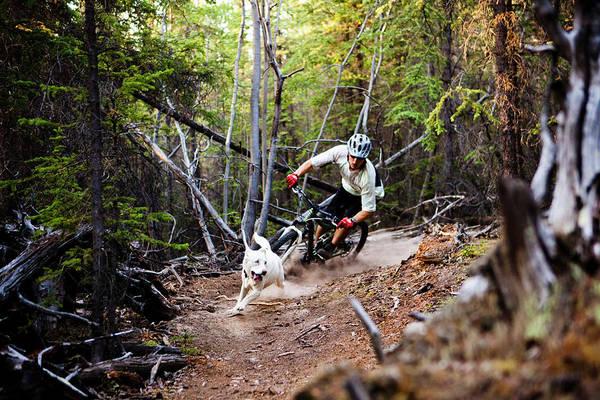 Chase Photograph - Mountain Biker Corners On A Dusty by Dan Barham