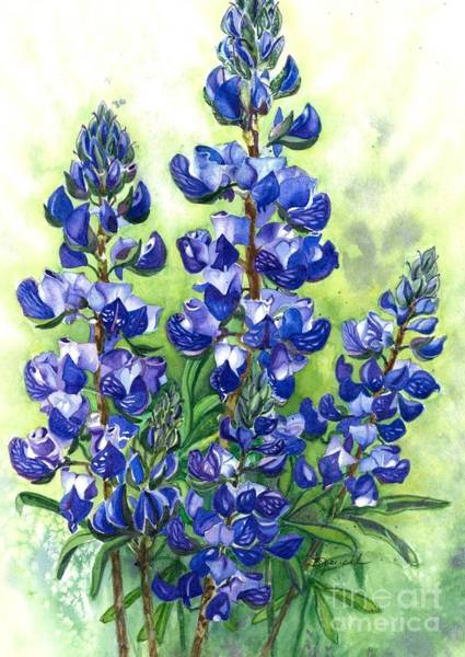 Wall Art - Painting - Mountain Blues-colorado Lupine by Barbara Jewell