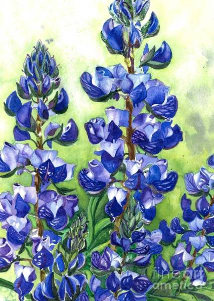Wall Art - Painting - Mountain Blues Lupine Study by Barbara Jewell