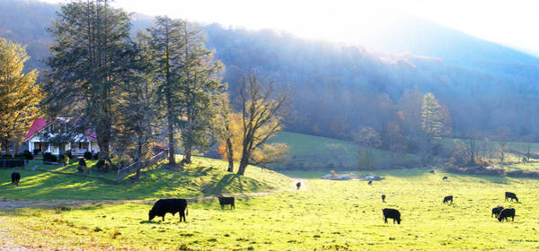 Photograph - Mountain Country Cow Farm by Duane McCullough