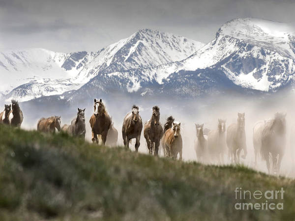 Prancing Horse Photograph - Mountain Dust Storm by Wildlife Fine Art