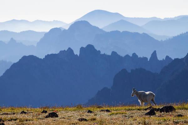 Mountain Goat Photograph - Mountain Goat, Cascade Mountain Range by Ken Archer