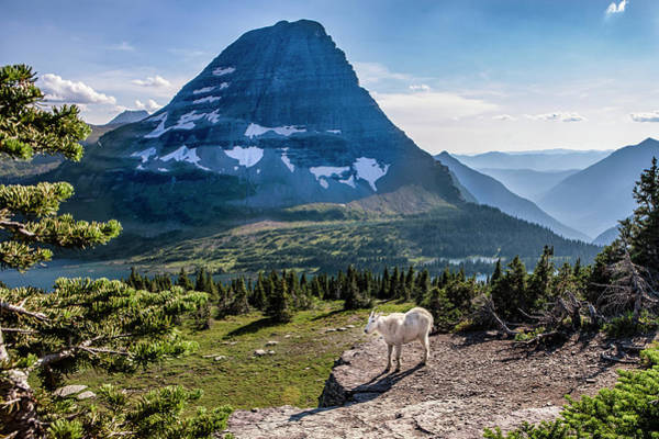 Mountain Goat Photograph - Mountain Goat In Front Of Bearhat by Tom Norring