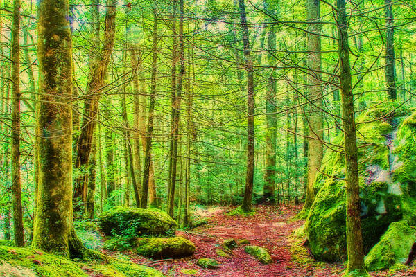Photograph - Mountain - Trail - Landscape - Mountain Green by Barry Jones
