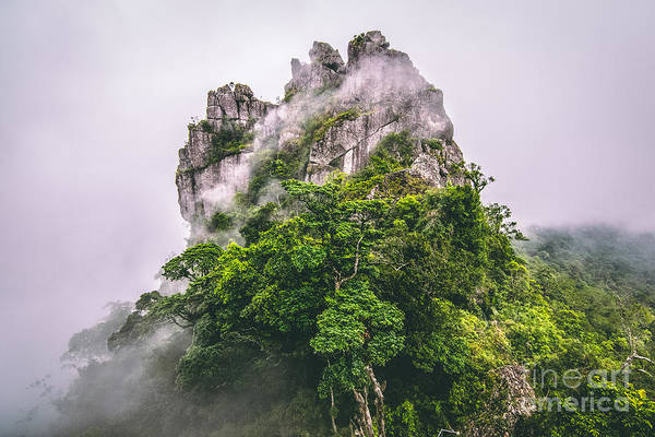 Tree Top Photograph - Mountain In The Cloud And Fog by Vasek Rak