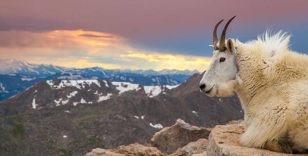 Photograph - Mountain King by Kevin  Dietrich