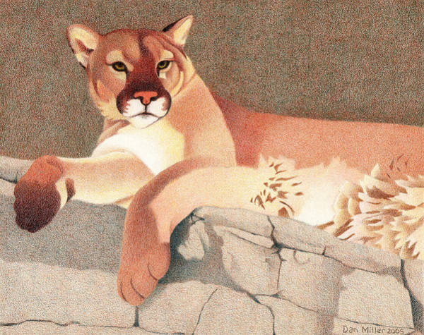 Drawing - Mountain Lion by Dan Miller