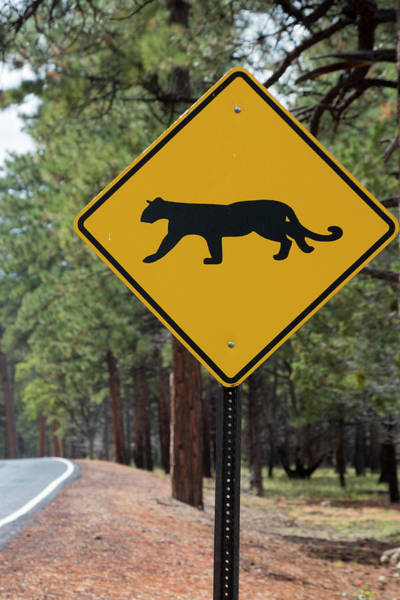 Puma Photograph - Mountain Lion Warning Sign by Jim West