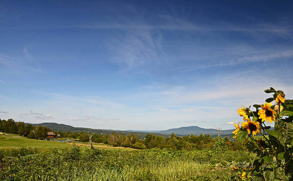 Photograph - Mountain Meadow 2 by Robert Mitchell