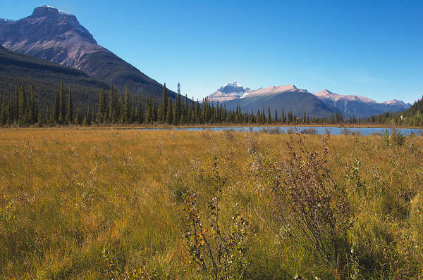 Photograph - Mountain Meadow And Marsh by Trever Miller