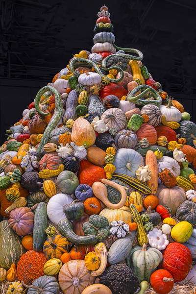 Gourd Photograph - Mountain Of Gourds And Pumpkins by Garry Gay