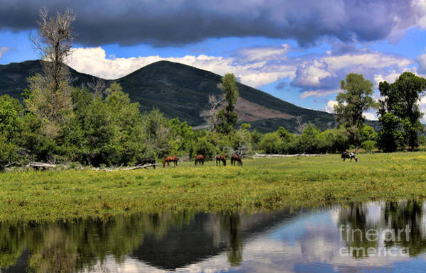 Photograph - Mountain Pasture by Richard Lynch