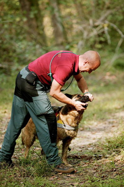 Service Dog Photograph - Mountain Rescue Worker And Dog by Mauro Fermariello/science Photo Library