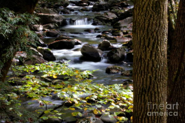 Photograph - Mountain Stream by Cynthia Mask