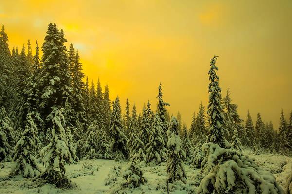Treeline Photograph - Mountain Sunrise by Ryan McGinnis