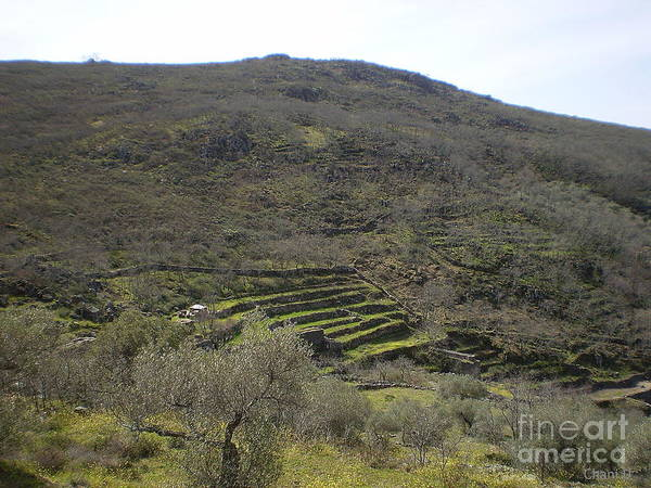 Photograph - Mountain Terraces In Extremadura by Chani Demuijlder