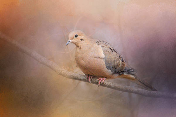 Photograph - Mourning Dove On A Winter Evening by Jai Johnson