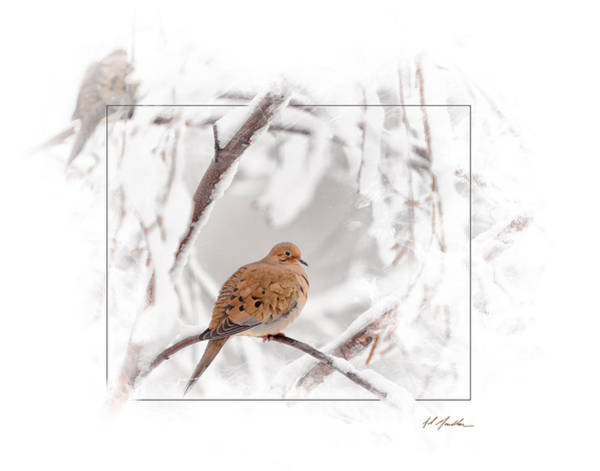 Photograph - Mourning Doves by Al  Mueller