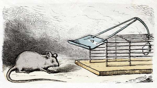 Trapping Photograph - Mouse And Mouse Trap by Cci Archives