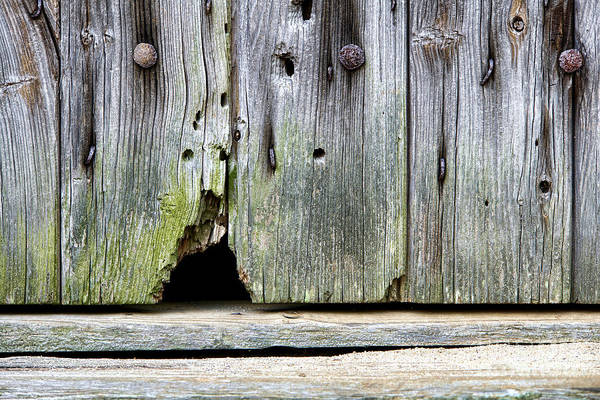 Mice Photograph - Mouse Hole by Olivier Le Queinec