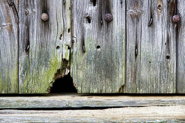 Sneak Photograph - Mouse Hole by Olivier Le Queinec