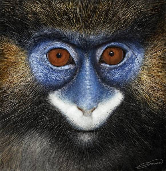 Moustached Guenon 2 Art Print by Owen Bell