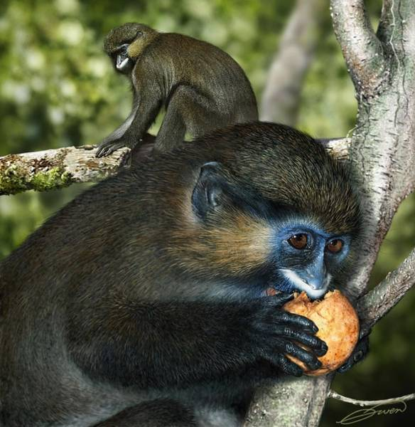 Moustached Guenon Art Print by Owen Bell